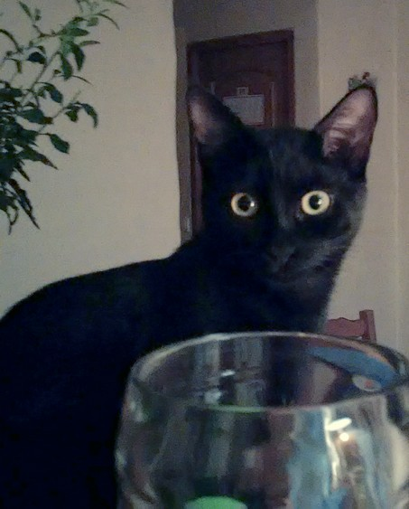 Baguy chat noir 1213