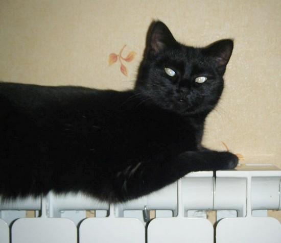 Bastet 636e membre club chats noirs
