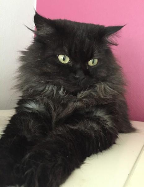 Bébé - chat noir 1194