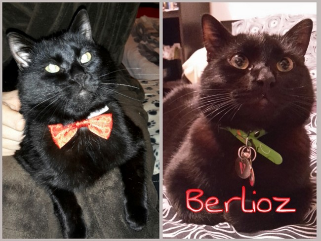 Berlioz 601e chat noir -Club Chats Noirs
