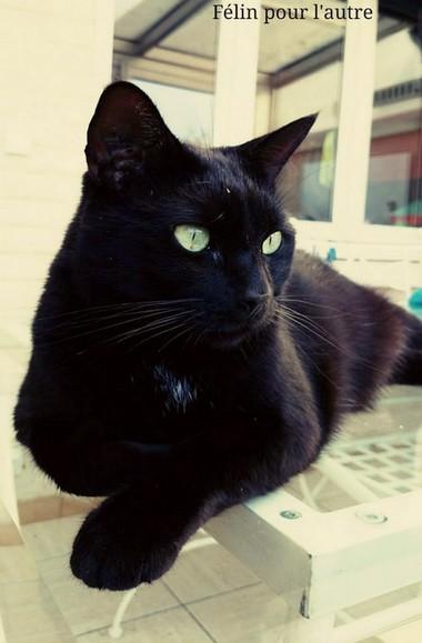 Bikini 544e membre club chats noirs