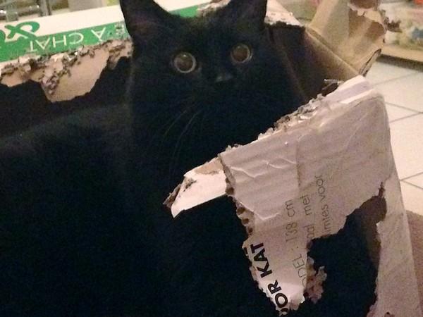 Boulbi chat noir 1203