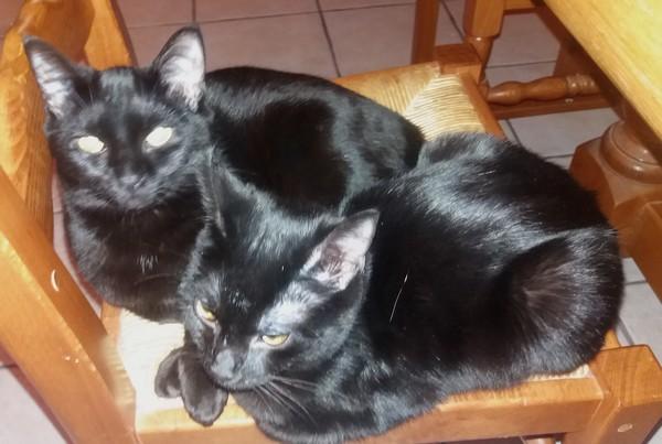 Caline et Chipie chat noir 1234