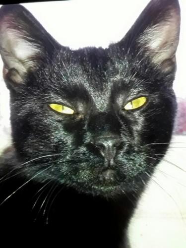 Chatel chat noir 1232