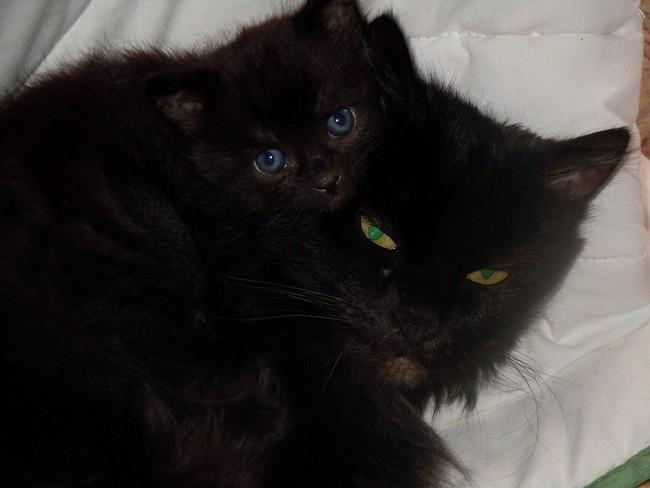 Chérie Black et Balthasar, 391e membres du Club Chats Noirs