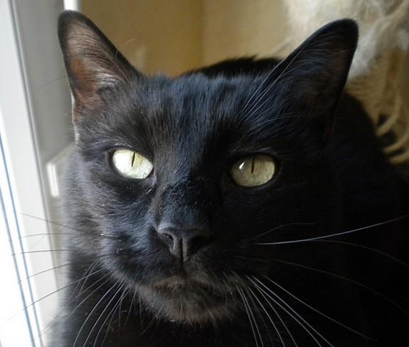 Chibi - 580 - chats noirs