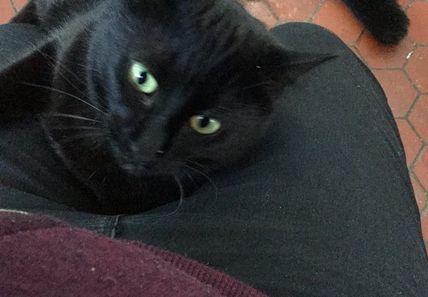 Chipie chat noir 1231