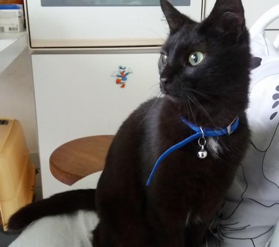 Chipie chat noir 1275