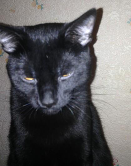 Chippy chat noir 1217