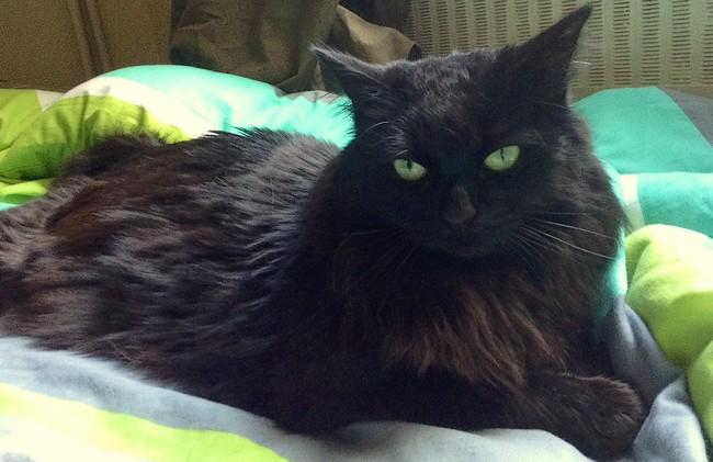 Cléopâtre 624e chat noir - Club Chats Noirs