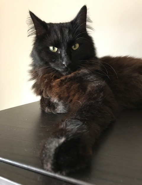 Clyde chat noir 1271