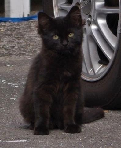 Coco, 360e membre du Club Chats Noirs