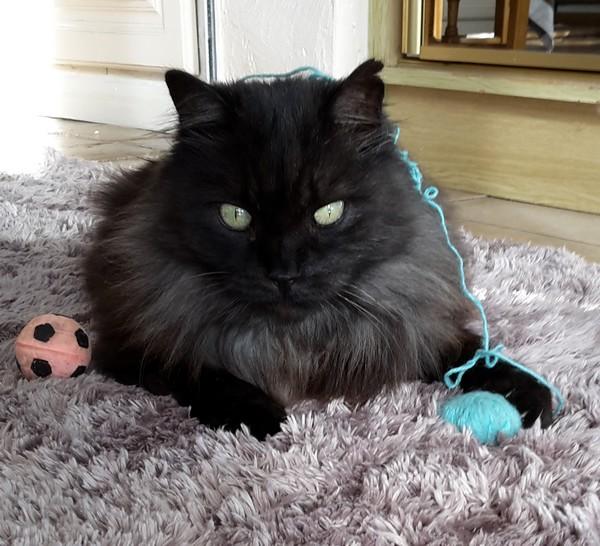 Couscous chat noir 1262