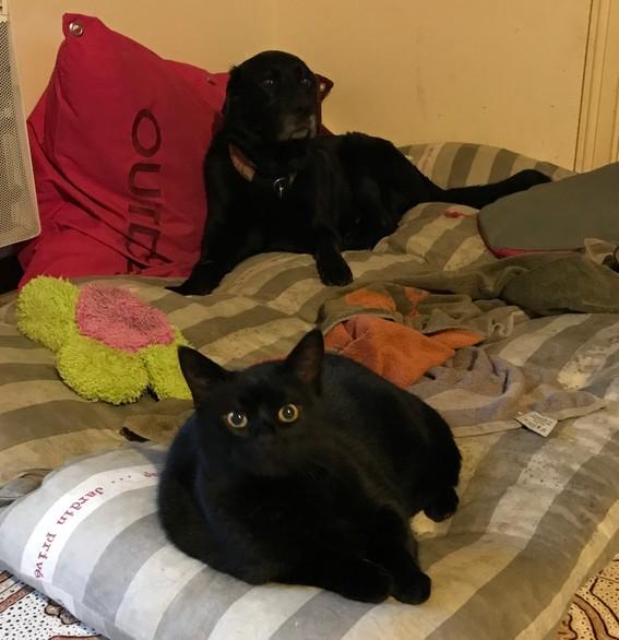 Ducat chat noir 1291