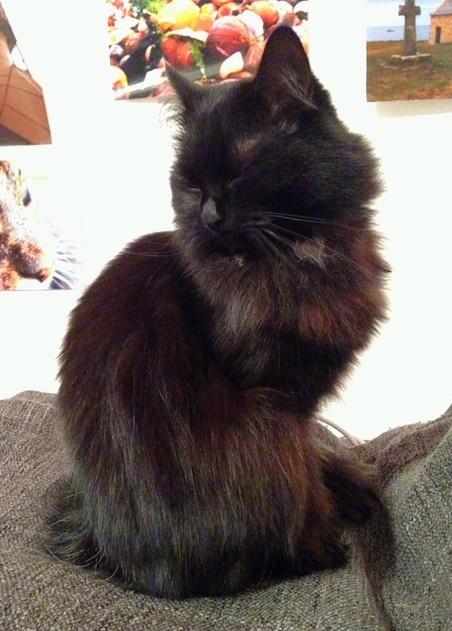 Ebène chat noir 1205