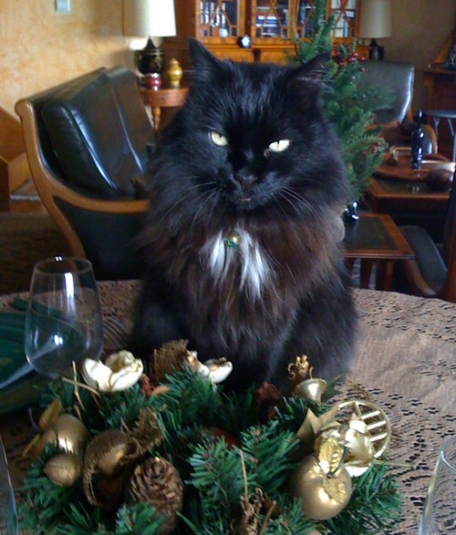 Felix 541e membre club chats noirs
