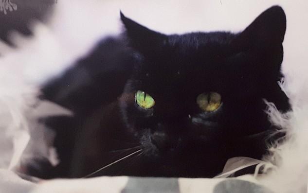 Fifi - chat noir 1196
