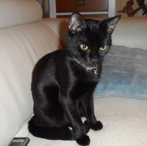 Fifi, 428e membre du Club Chats Noirs