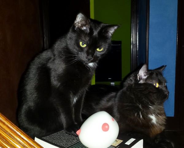 Finette et Cachou chat noir 1284