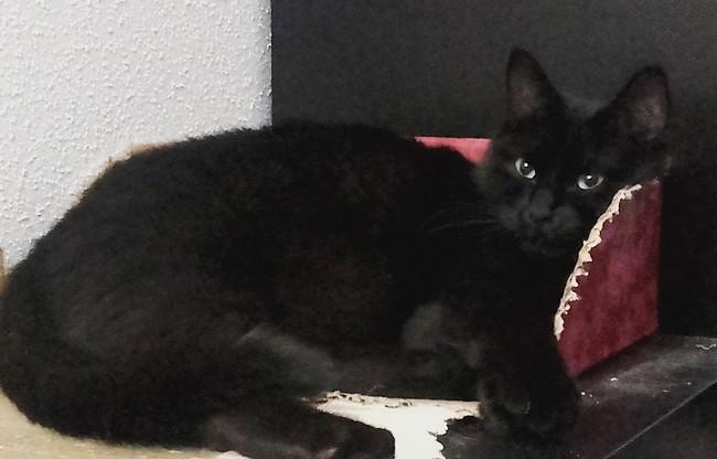 Freyr - chat noir 1193