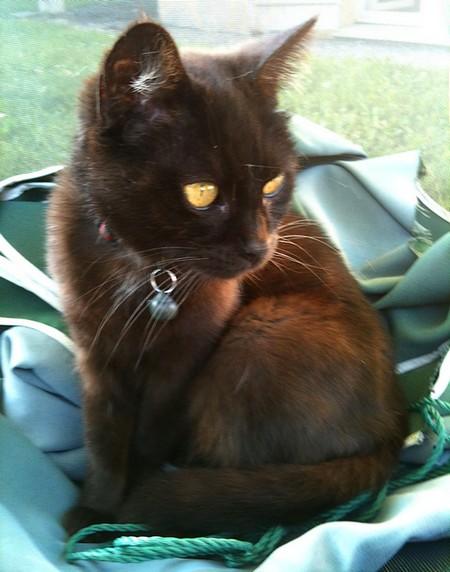 Frimousse 542e membre club chats noirs