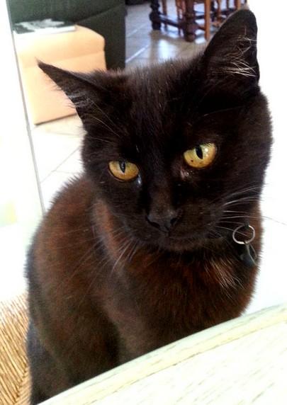 Frimousse 542e membre du club chats noirs