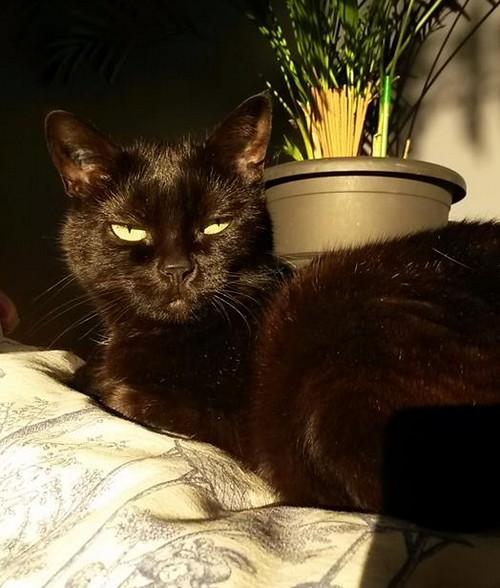Fripounette 546e membre club chats noirs