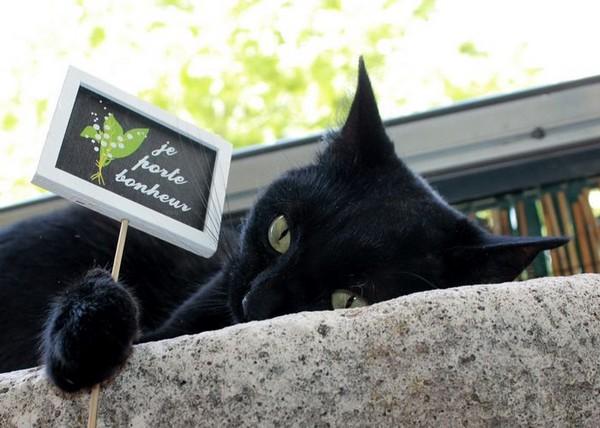Gabrielle chat noir 1274