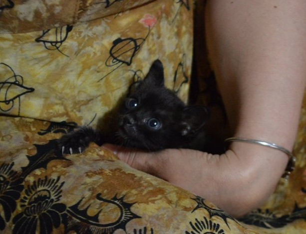 Godiva, 483e membre du Club Chats Noirs