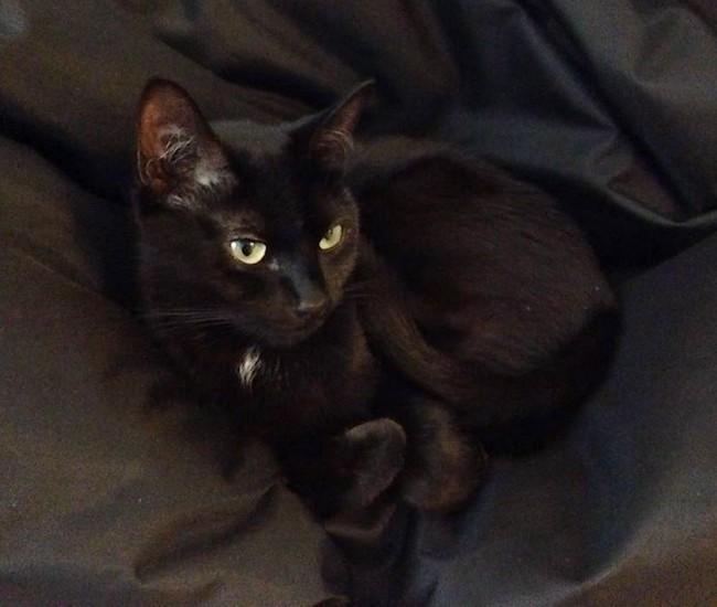 Gwagwa chat noir 1124