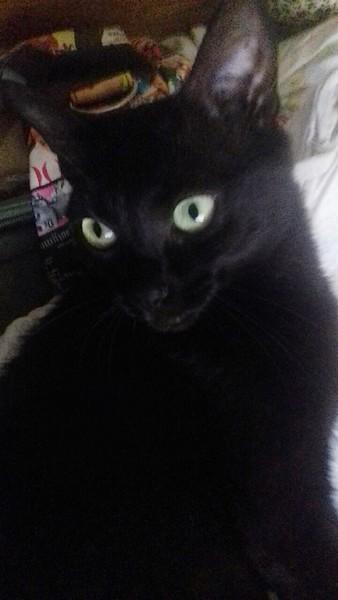Happy chat noir 1281
