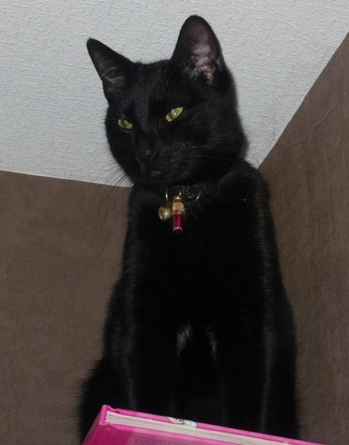 Haribo, 461 e membre du Club Chats Noirs