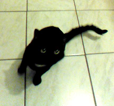 Helios, 373e membre du club Chats Noirs
