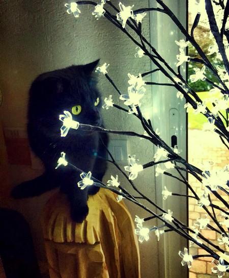 Hélios - 576 - chats noirs