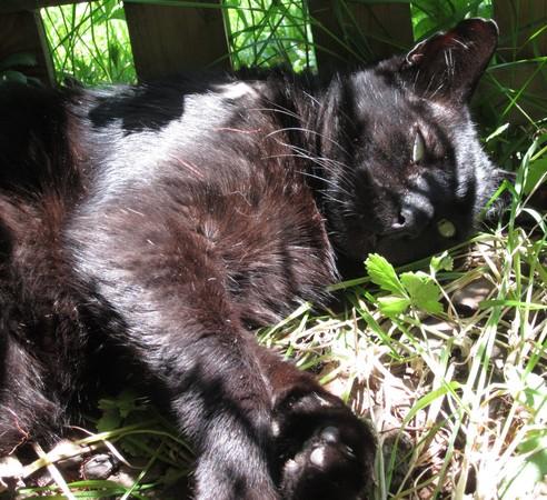 Hermès 583e chat noir -Club Chats Noirs