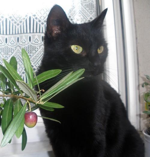 Isis 530e membre club chats noirs
