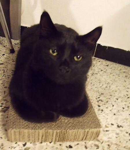 Jack 548e membre club chats noirs