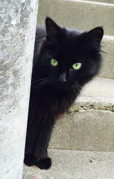 Jaffa chat noir 1220