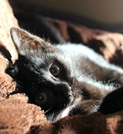 Jodie 547e membre club chats noirs