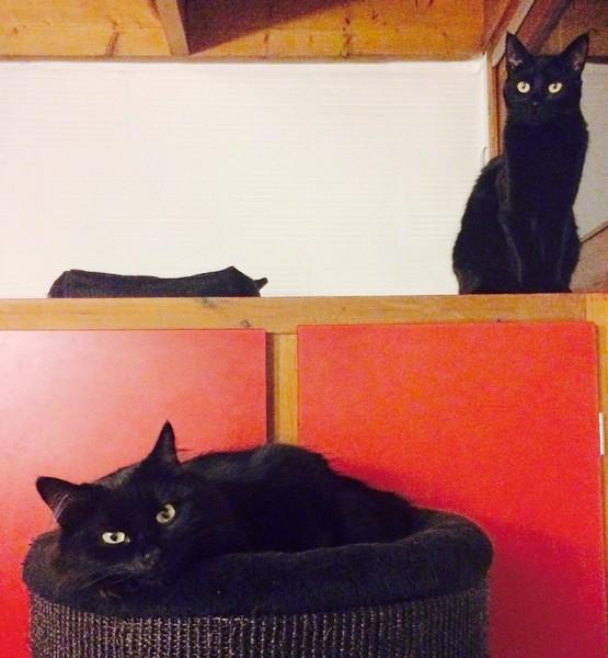 Josiane et Chrono chat noir 1287