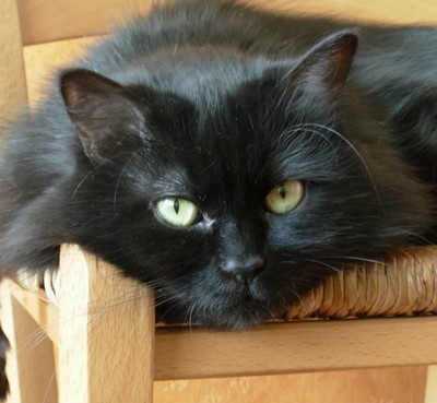 Reva chats noirs