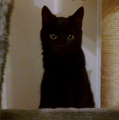 Kali, 405ème membre du Club Chats Noirs