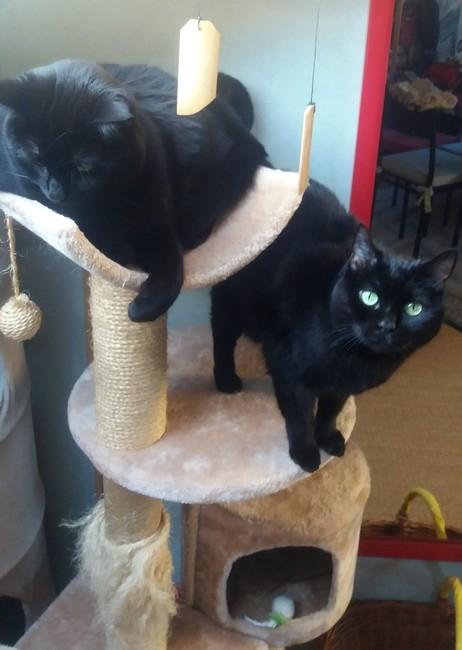 Kyara et Maia chat noir 1227