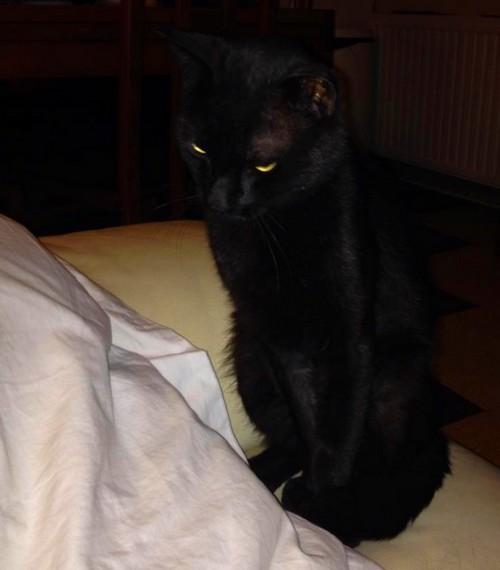 Kidcat 484e membre du Chats Noirs Club