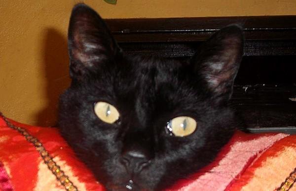 Kiki, 411e membre du Club Chats Noirs