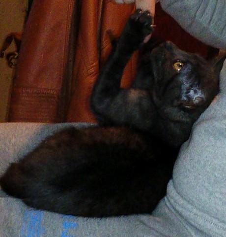 Kiwi 644e chat noir
