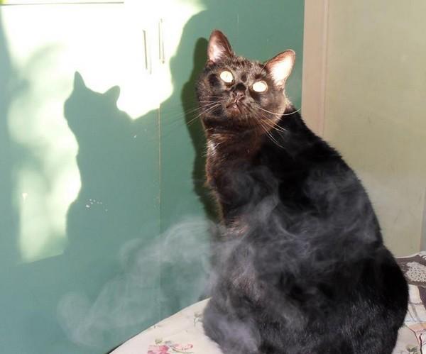 Kora 446e membre du club chats noirs