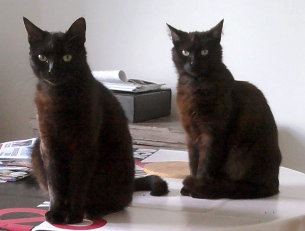 Kraby et Twiggy 1511