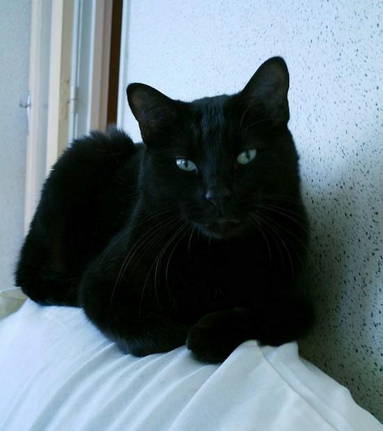 Lakota - 574 - chats noirs