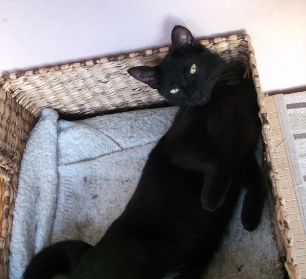Lally chat noir 1299